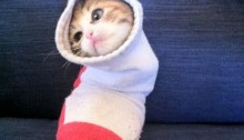 Cat in sock